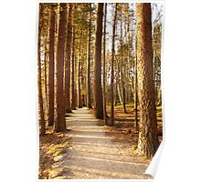 Evening spring shadows in the trees Poster