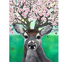 Apple Blossom Deer; Hooves with da Fur Photographic Print