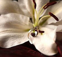 ring on a lilly by Shelley Spencer