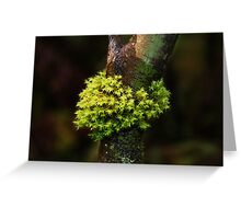 Moss Series #1- Nolte State Park Greeting Card