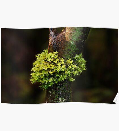 Moss Series #1- Nolte State Park Poster