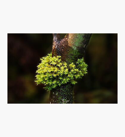 Moss Series #1- Nolte State Park Photographic Print