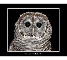 Barred Owl #2 Photographic Print