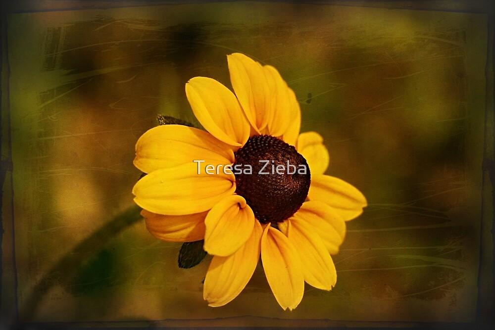 Textured Black-eyed Susan by Teresa Zieba