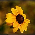 Textured Black-eyed Susan by Teresa Zieba