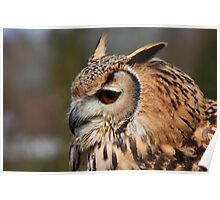 Bengal Eagle Owl - Bubo bengalensis Poster