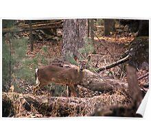 hunters gaze Poster