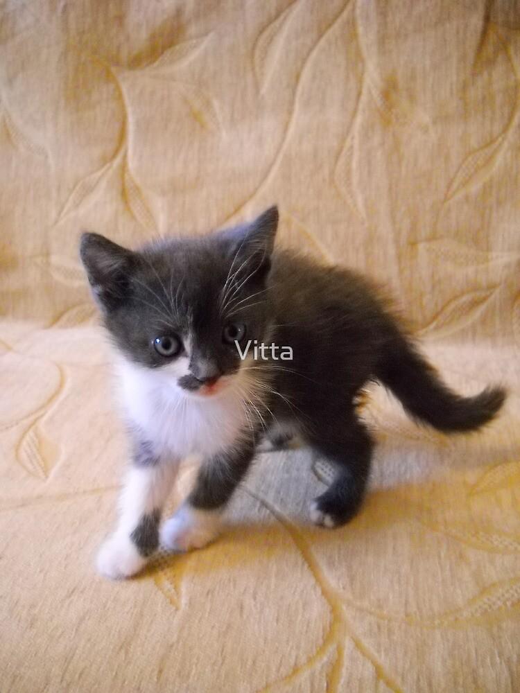 Little Kitten. by Vitta