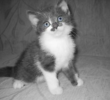 Tiny Kitten. by Vitta