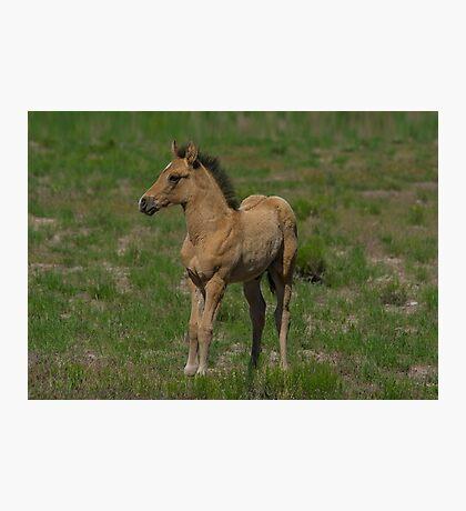 Beautiful Foal  Photographic Print