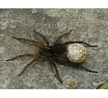 Momma Spider Photographic Print