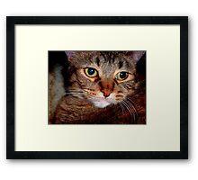 J' aime les chats...Baby Girl ©  Framed Print