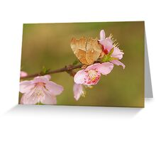 comma and peach Greeting Card