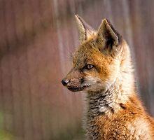 Fox Kit Portrait II by Jay Ryser
