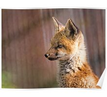 Fox Kit Portrait II Poster