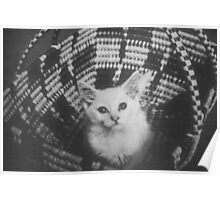 Basket cat Poster