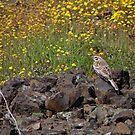 Sparrow and Flowers by Patty (Boyte) Van Hoff