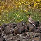 Sparrow and Flowers by Patty Boyte