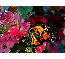 Monarch Butterfly Among Flower Blooms Photographic Print