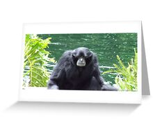 Grey Muzzle Greeting Card