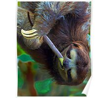 Snacking Sloth Poster