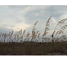 Tybee Island - Lighthouse through the Grass Photographic Print