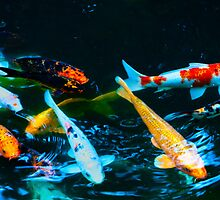Colorful Pond Full of Koi by Ron Deage
