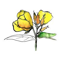 stylise quick watercolor sketch of Oenothera by IrinaVi
