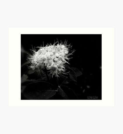 White Tendrils Art Print