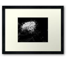 White Tendrils Framed Print