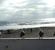 Seagull Quartet by kristawho