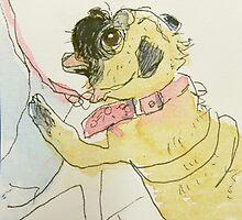 bug eyed pug begging by donna malone