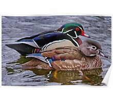 Mr & Mrs Wood Duck Poster