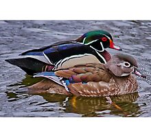 Mr & Mrs Wood Duck Photographic Print