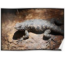 Spiny Lizard Poster