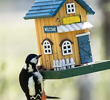 Great spotted woodpecker visiting a feeding place by Susanna Hietanen