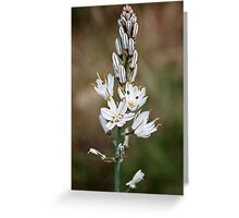 In bloom Greeting Card