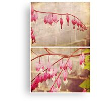 Spring - Bleeding Hearts Canvas Print