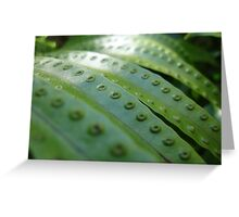 Fern Gully Greeting Card