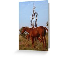 Bush Work Horse Greeting Card