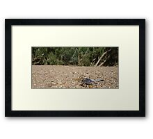 Sapphire Dragonfly Framed Print