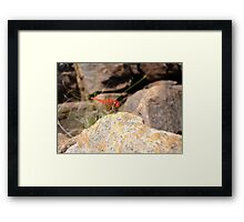Ruby Dragonfly Framed Print