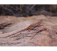 Manning Dragon 2 Photographic Print