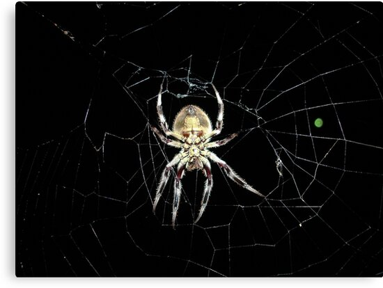 Spider by Caine Mazoudier