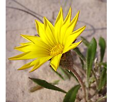 Beach Bloom Photographic Print