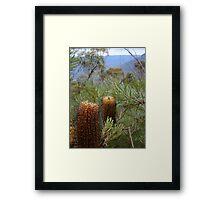 Bottlebrush Mountains Framed Print