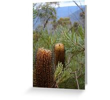 Bottlebrush Mountains Greeting Card