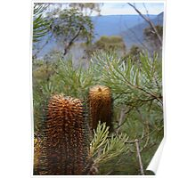 Bottlebrush Mountains Poster