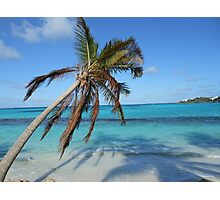 Anguilla Palm Tree and Ocean Photographic Print
