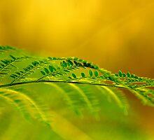 soft green by Cheryl Ribeiro